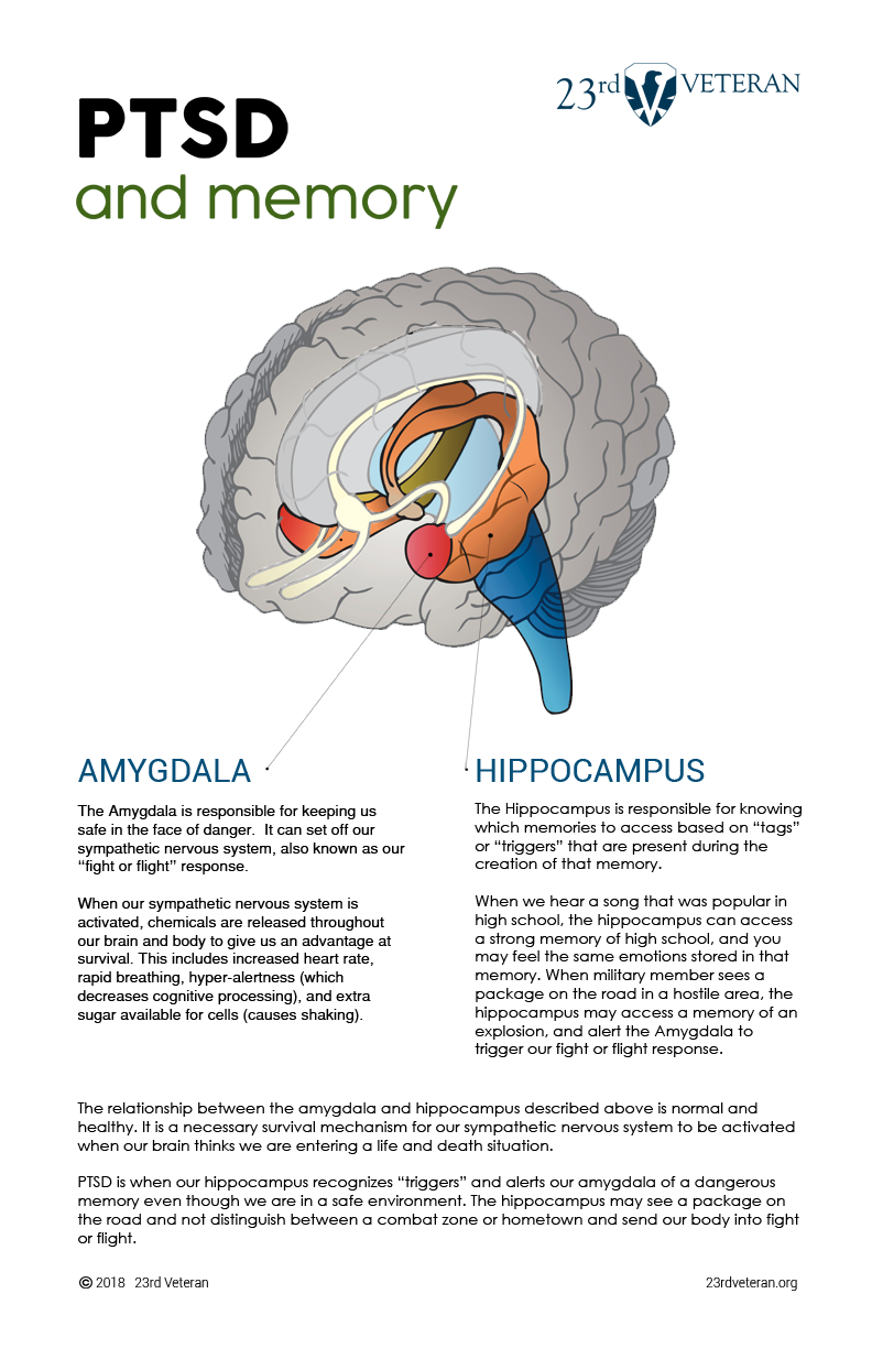 activation of the sympathetic nervous system causes our bodies to